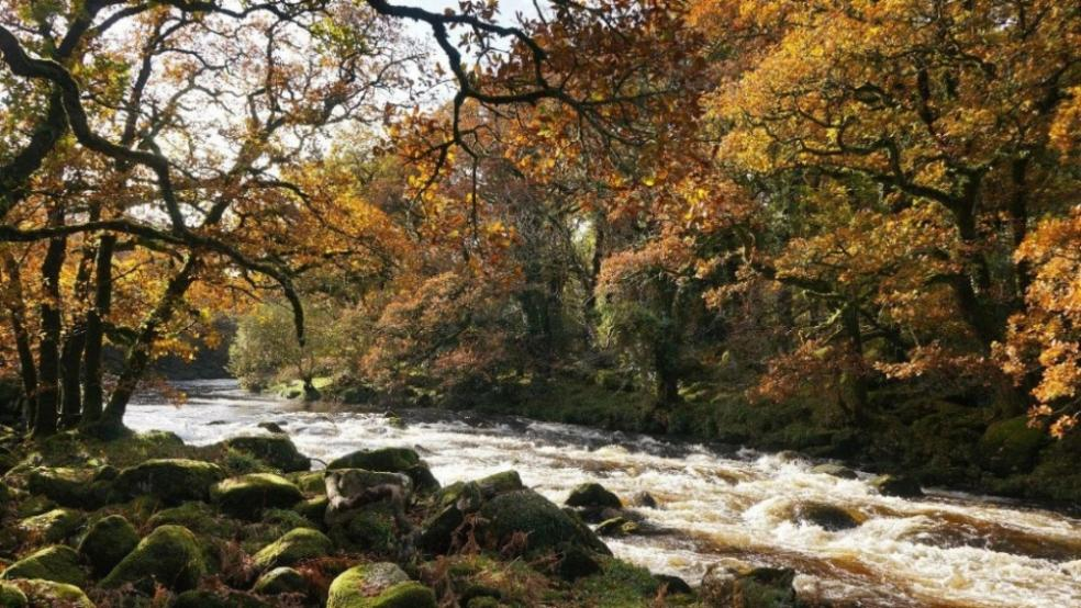 Picture of a beautiful river on dartmoor