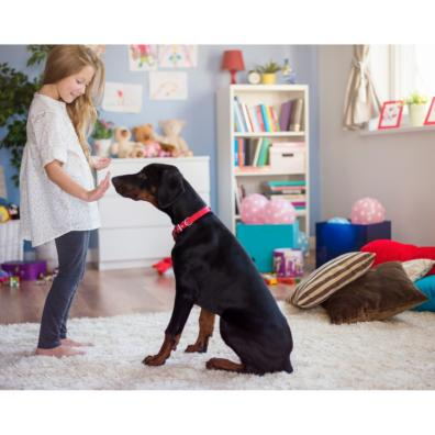 Picture of a child training as dog