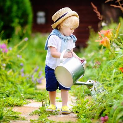 Picture of a small child watering some plants in a garden