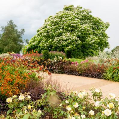 Picture of RHS garden