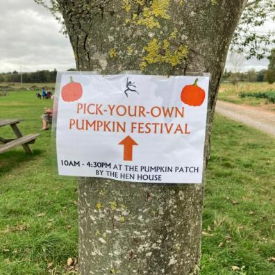 Picture of a pumpkin picking sign at darts farm